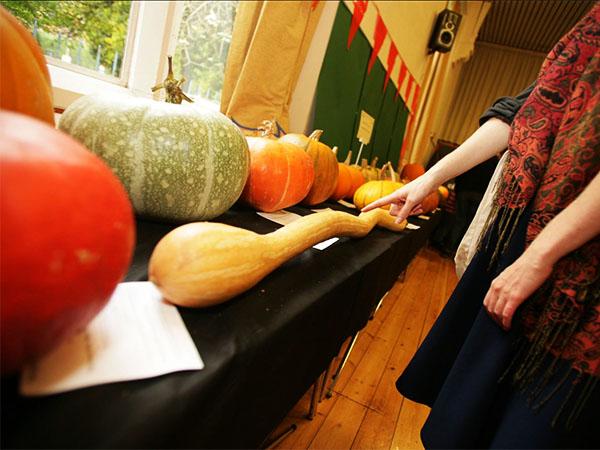 pumpkin-show-d